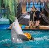 Дельфинарии, океанариумы в Пограничном